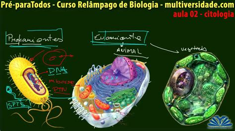 02 CURSO RELÂMPAGO DE BIOLOGIA TIPOS DE CÉLULAS   YouTube