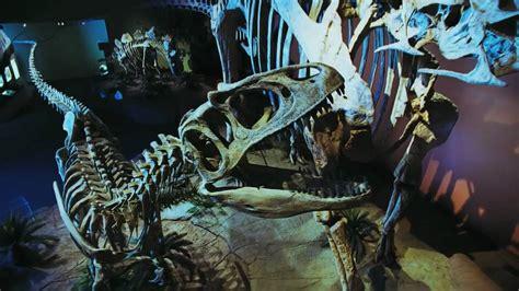 1/3  Dinosaurs Alive! HD en español   YouTube