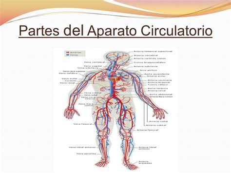 1ºA Aparato Circulatorio Rosemary Santiago   ppt descargar