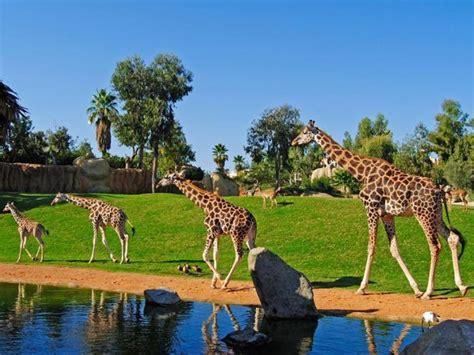 1 Entrada ADULTO Bioparc Valencia  un zoológico de nueva ...