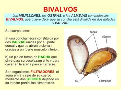 1ºESO: Los Invertebrados