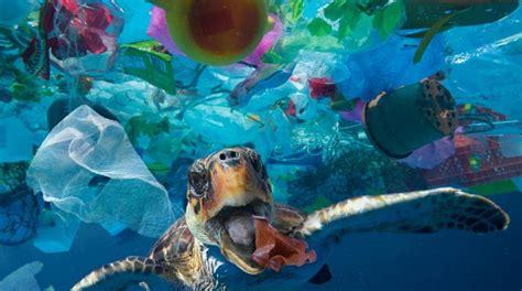 1 millon de aves y 100 mil animales marinos mueren cada ...