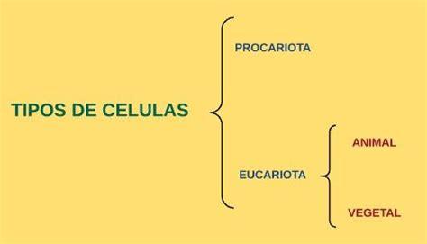 1. ¿Que es una célula y como esta conformada?   MUNDO ...