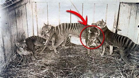 10 Animales Extintos por el Hombre | Cazados Hasta la ...
