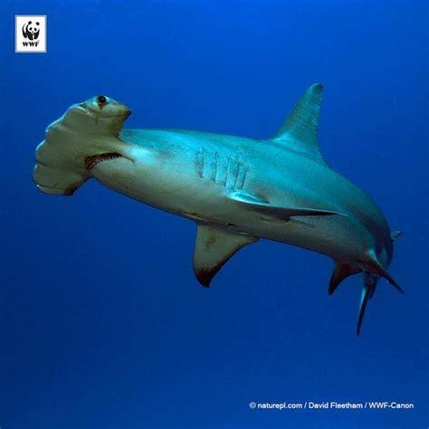 10 animales marinos en peligro de extinción