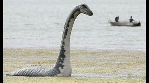 10 Animales Que Vivieron Con Los Dinosaurios Que Aún ...