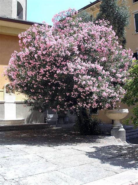 10 arbustos resistentes al frío para el jardín   pisos Al ...
