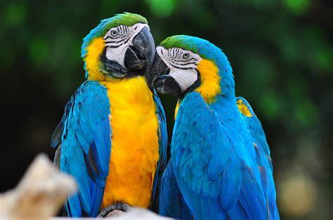 10 Aves Exóticas De Rasgos Singulares Y Llamativos Nombres ...