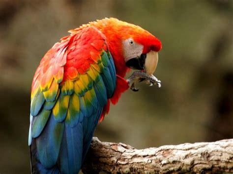 10 aves exóticas del Amazonas   Nombres y fotografías