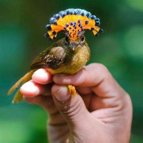 10 aves exóticas hermosas que te gustarán | Mascotas