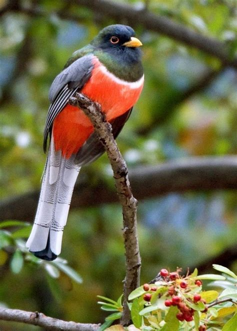 10 Aves exóticas sorprendentes del mundo | pajaros y aves ...
