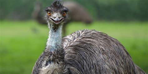10 aves incríveis e assustadoras que você tem que conhecer ...
