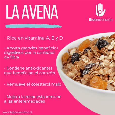 10 Beneficios de la Avena para tu Salud   Blog Bioprevención