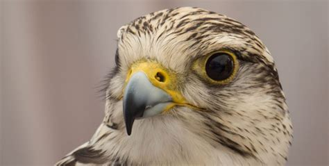10 Características de las Aves