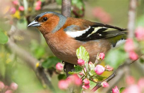 10 common garden birds you can easily identify from your ...