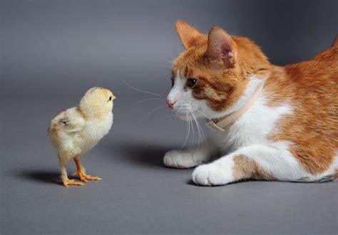 10 comportamientos típicamente felinos — Mis animales