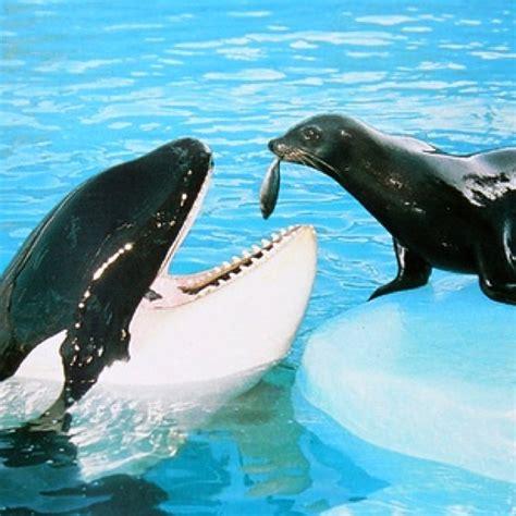 10 curiosidades de las orcas y porque es mi animal ...