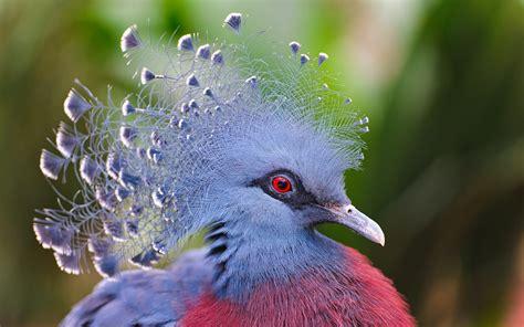 10 de Enero, Día Mundial de las Aves.   logopediaendanza