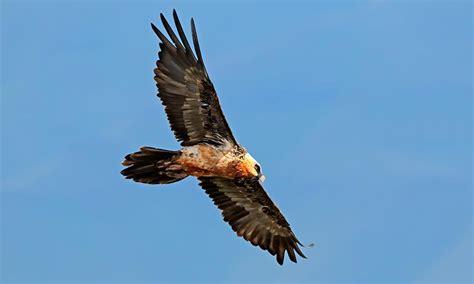10 de los mejores lugares para ver aves en España   Foto 1