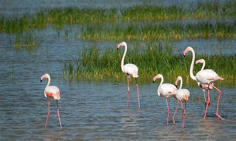 10 de los mejores lugares para ver aves en España   Foto 5