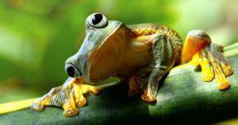 10 Ejemplos de Animales Ovovivíparos