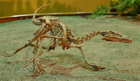10 Facts About the Velociraptor Dinosaur