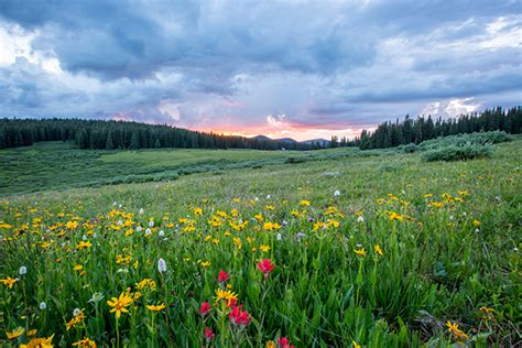 10 facts about the wildflower and other plants | Enjoy ...
