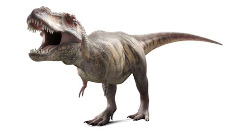 10 Facts About Tyrannosaurus Rex, King of the Dinosaurs