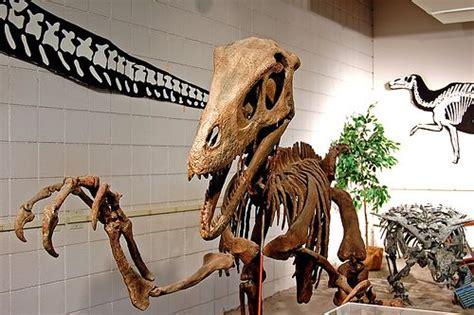 10 Facts About Utahraptor, the World s Biggest Raptor