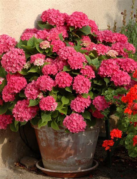 10 flores de invierno para macetas de interior y exterior