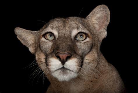 10 fotos espectaculares de la exposición de animales Photo Ark