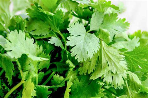10 hierbas aromáticas para cocinar | Wikicocina