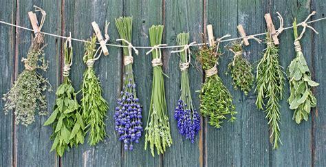 10 hierbas aromáticas que puedes cultivar en agua durante ...