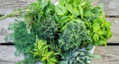 10 hierbas frescas y aromáticas que debes conocer por lo ...