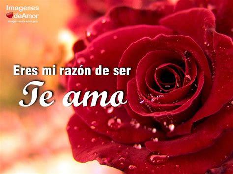 10 Imágenes de rosas para decir TE AMO al amor de tu vida ...