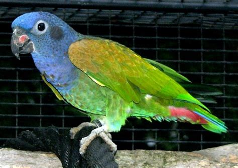 10 Intelligent and Friendly Pet Parrot Species