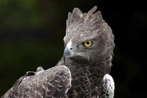 10 Largest Raptor Birds | HubPages