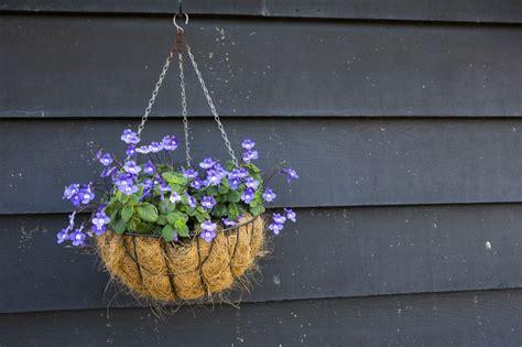 10 mejores plantas colgantes para interiores y exteriores