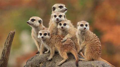 10 Most Amazing Miami Metro Zoo Animals | TourismInFlorida.com