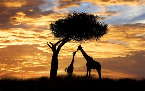 10 Myths about Kenya that are not True | Transit Hotels