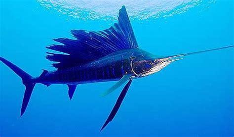 10 peces de agua salada más codiciados para pesca deportiva