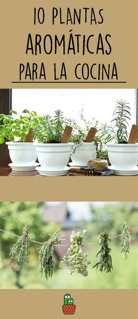 10 plantas aromáticas para la cocina | Macetas plantas ...