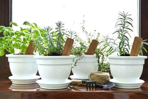 10 PLANTAS AROMÁTICAS para la COCINA   Usos y Beneficios