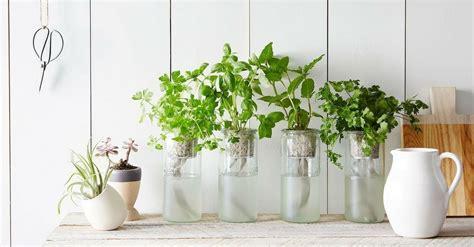 10 plantas aromáticas que não precisam de terra para crescer