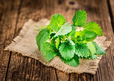 10 plantas aromáticas que puedes disfrutar todo el año ...