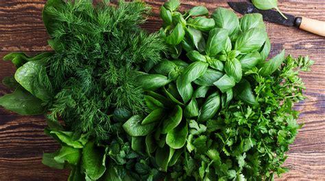 10 plantas aromáticas que puedes usar para cocinar