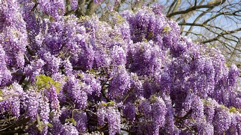 10 plantas de exterior  con y sin flores  para decorar tu ...
