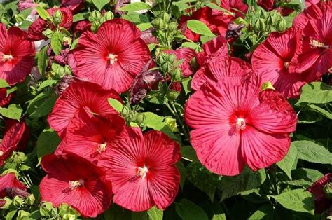 10 plantas de jardín con flores resistentes al sol   lista ...