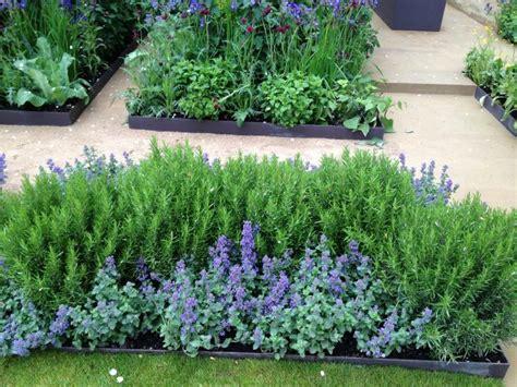 10 plantas en tu jardín que te ayudarán a ahuyentar los ...