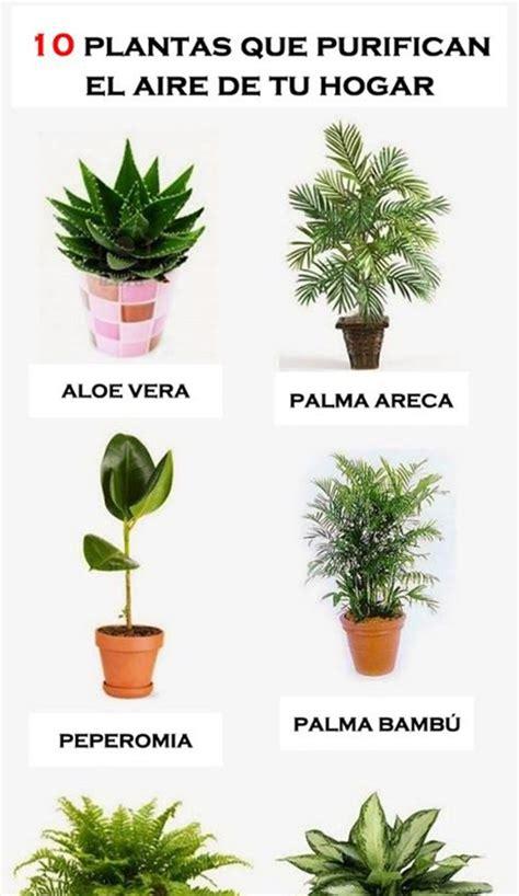 10 plantas para purificar el aire de tu hogar ...